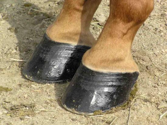 cascos-de-caballo-e1399660979766