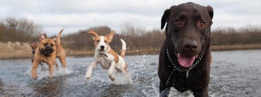 perros-jugando-en-el-agua